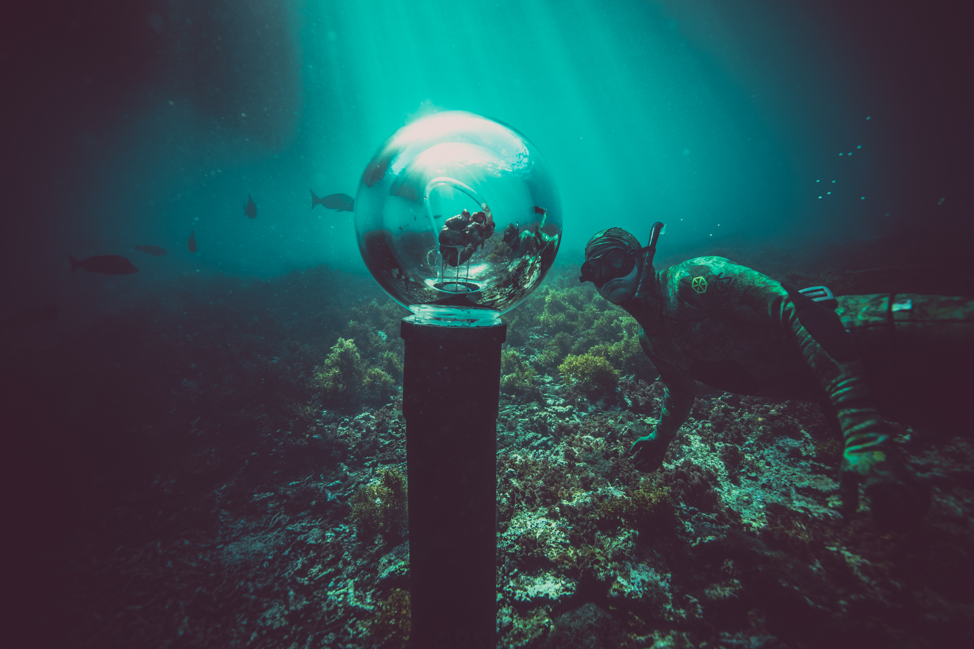 Terra Australis feature in shark week