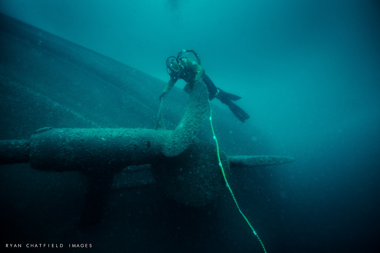 Terra Team in the news for rescuing entangled whale